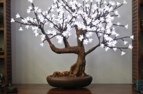 Bonsai Blossom Tree 280